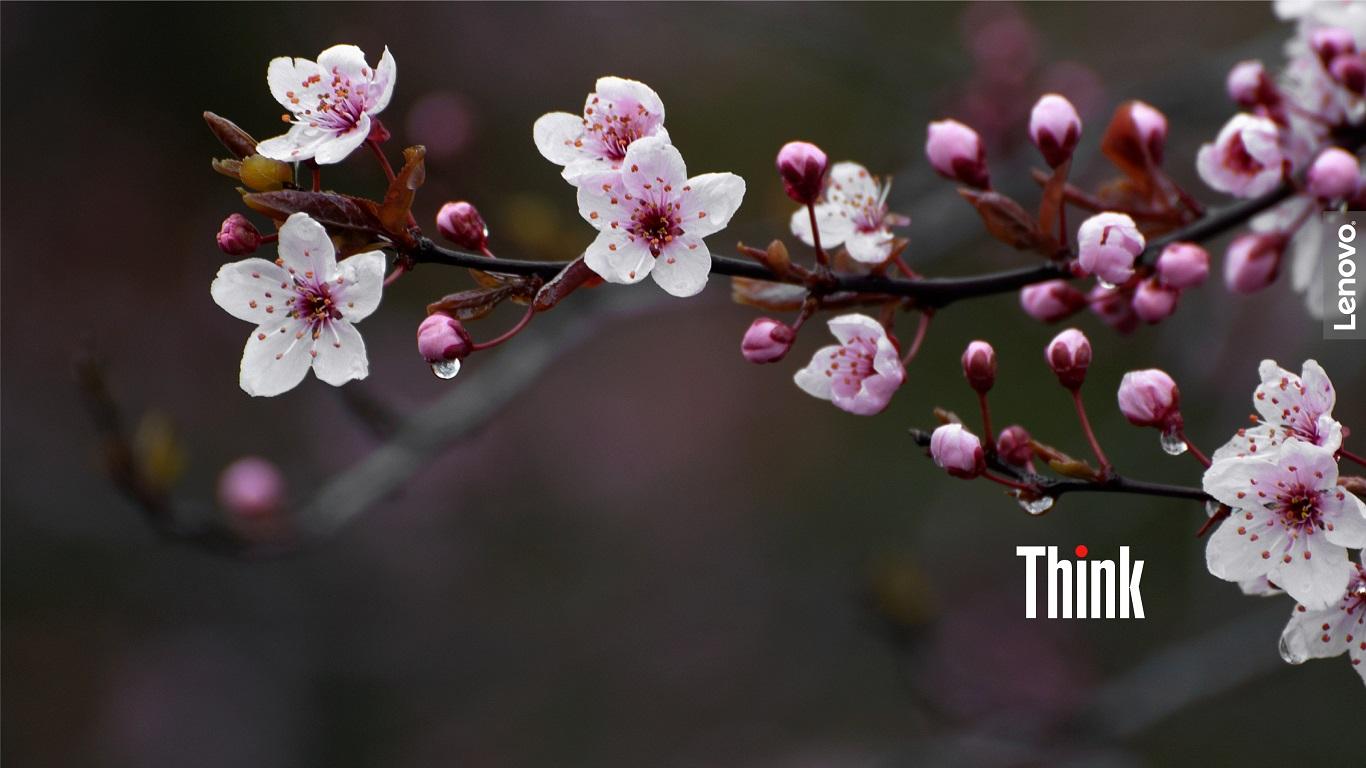 Lenovo Spring